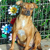 Adopt A Pet :: Pearl - Seattle, WA