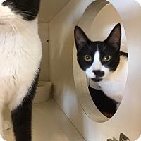 Adopt A Pet :: Buttons - San Jose, CA