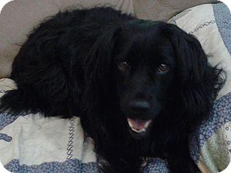 Retriever (Unknown Type)/Labrador Retriever Mix Dog for adoption in Acworth, Georgia - Gracie