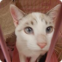Adopt A Pet :: Jasper - Holden, MO