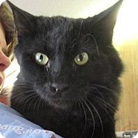 Adopt A Pet :: Karet - Reeds Spring, MO