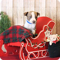 Adopt A Pet :: Bryce - Waldorf, MD