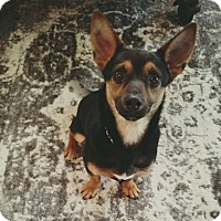 Adopt A Pet :: Meeko - New Oxford, PA