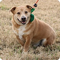 Adopt A Pet :: Dalton - Pluckemin, NJ