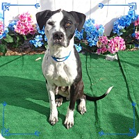 Adopt A Pet :: BLACK - Marietta, GA