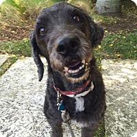 Adopt A Pet :: Taz - Ocean Ridge, FL