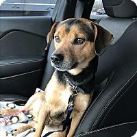 Adopt A Pet :: Alexander - Aurora, IL