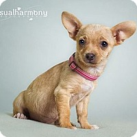 Adopt A Pet :: Gerda - Phoenix, AZ
