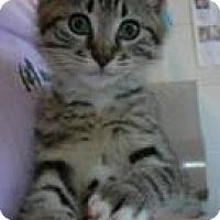 Adopt A Pet :: Cassi - Arlington, VA
