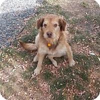 Adopt A Pet :: Rufus - Saskatoon, SK