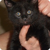 Adopt A Pet :: Sonick - North Highlands, CA