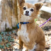 Adopt A Pet :: Aidan - San Francisco, CA