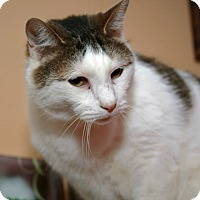 Adopt A Pet :: Kirby - Geneseo, IL