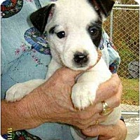 Adopt A Pet :: Zola - Lincolndale, NY