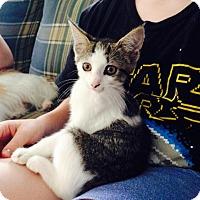 Adopt A Pet :: Hazel - Nolensville, TN