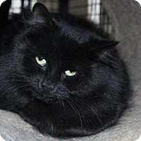 Adopt A Pet :: Donna - Caistor Centre, ON