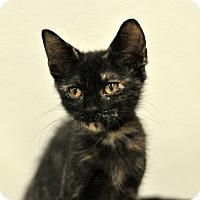 Adopt A Pet :: Tatiana - Wilmington, NC