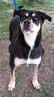Labrador Retriever Mix Dog for adoption in Orland, California - Maude