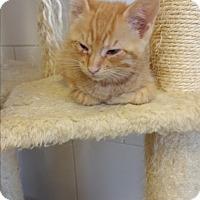 Adopt A Pet :: Panama - Chippewa Falls, WI