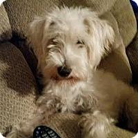 Adopt A Pet :: Kylie - San Antonio, TX