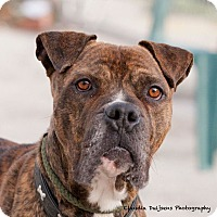 Adopt A Pet :: Kane - Long Beach, NY