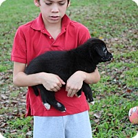 Adopt A Pet :: Bunny - Harmony, Glocester, RI