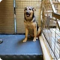 Adopt A Pet :: RUBEE - Pena Blanca, NM