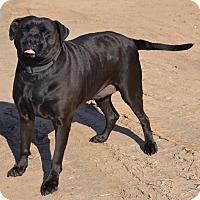 Adopt A Pet :: Buddy - Woodward, OK