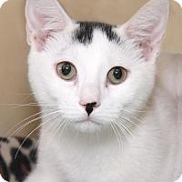 Adopt A Pet :: Mickey - Encinitas, CA
