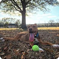 Adopt A Pet :: Kiki - Gainesville, FL