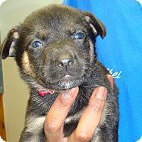 Adopt A Pet :: Edison - Wharton, TX