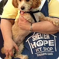 Adopt A Pet :: Liza - Thousand Oaks, CA