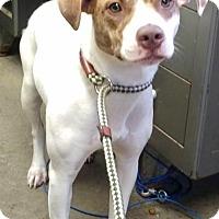 Adopt A Pet :: ROSCOE - Cadiz, OH