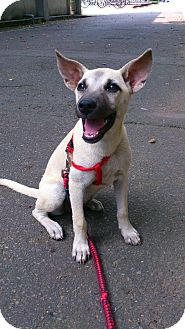 German Shepherd Dog Mix Puppy for adoption in Irvine, California - Buffy