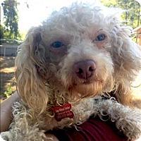 Adopt A Pet :: Yoshi - Encino, CA