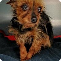 Adopt A Pet :: Crouton - Newark, DE