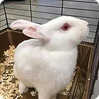 Adopt A Pet :: Layla - Madison, NJ