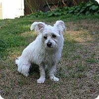 Adopt A Pet :: Baxter - Bristol, CT