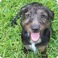 Adopt A Pet :: Katy - Bradenton, FL