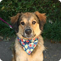 Adopt A Pet :: Keona - Springfield, MO