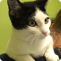 Adopt A Pet :: FLOWER - Hibbing, MN