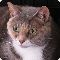 Adopt A Pet :: Crystal - Unionville, PA