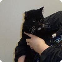 Adopt A Pet :: 329794 - Wildomar, CA