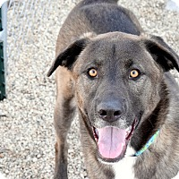 Adopt A Pet :: Riley - Meridian, ID