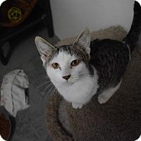 Adopt A Pet :: Possum - Grinnell, IA