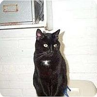 Adopt A Pet :: Maybelline - Beacon, NY