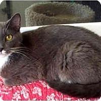 Adopt A Pet :: Penney - Palmdale, CA