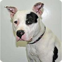 Adopt A Pet :: Jabba - Port Washington, NY