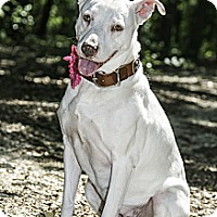 Adopt A Pet :: Annie - Aubrey, TX
