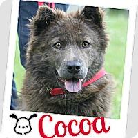 Adopt A Pet :: Coco - Brazil, IN